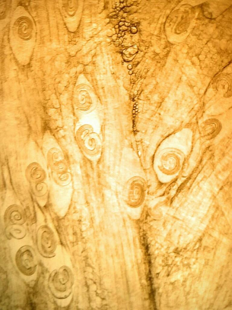 Trihinela, Apatin, mart 2016, Apavet, rekord 145 larvi isečak