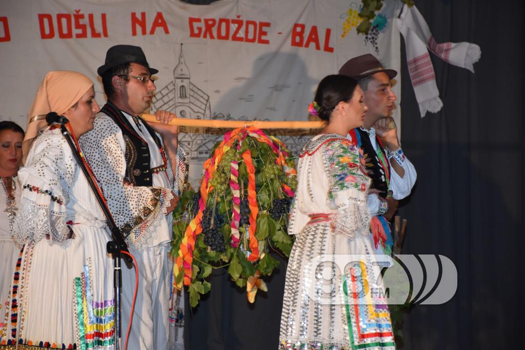 Grozdjebala sonta 2017 (33)