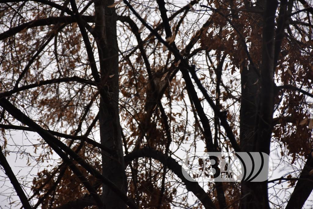 Prebrojavanje sova, sove (2)
